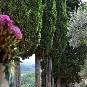 cipressi-campagna-toscana